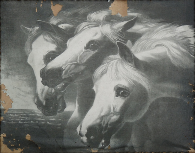 Horses - Before